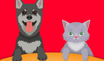 mascotas_b0bdbd291c4901df8c912dd794787bc3
